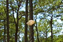 Plastic Bag, (2009).