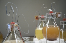 """Picture of """"Intelligent Bacteria - Saccharomyces cerevisiae"""", installation by HONF - The House Of Natural Fiber"""
