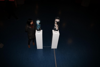 """Picture of """"An Ecosystem of Excess"""", installation by Pinar Yoldas"""